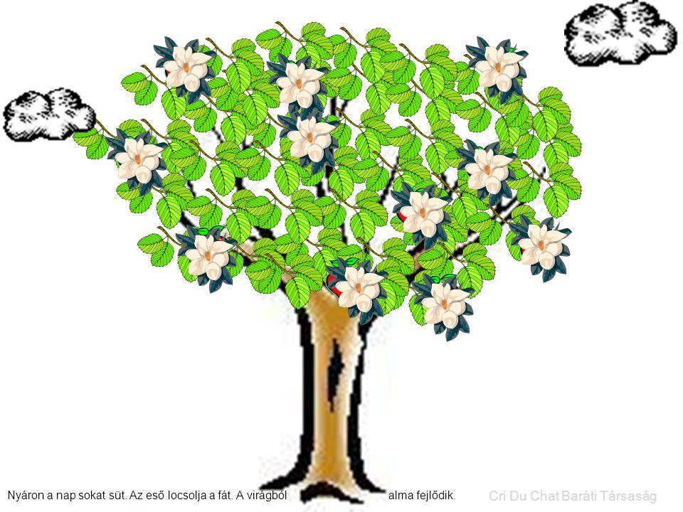 Nyáron a nap sokat süt.Az eső locsolja a fát. A virágból alma fejlődik.