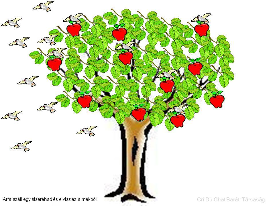 Arra száll egy siserehad és elvisz az almákból Cri Du Chat Baráti Társaság