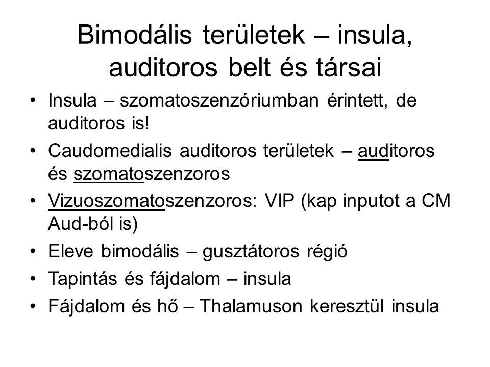 Bimodális területek – insula, auditoros belt és társai Insula – szomatoszenzóriumban érintett, de auditoros is! Caudomedialis auditoros területek – au