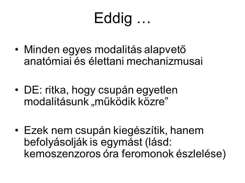 """Eddig … Minden egyes modalitás alapvető anatómiai és élettani mechanizmusai DE: ritka, hogy csupán egyetlen modalitásunk """"működik közre"""" Ezek nem csup"""