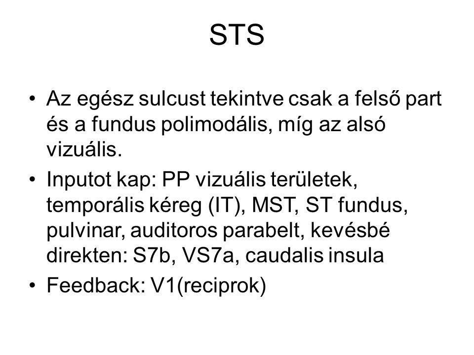 STS Az egész sulcust tekintve csak a felső part és a fundus polimodális, míg az alsó vizuális. Inputot kap: PP vizuális területek, temporális kéreg (I