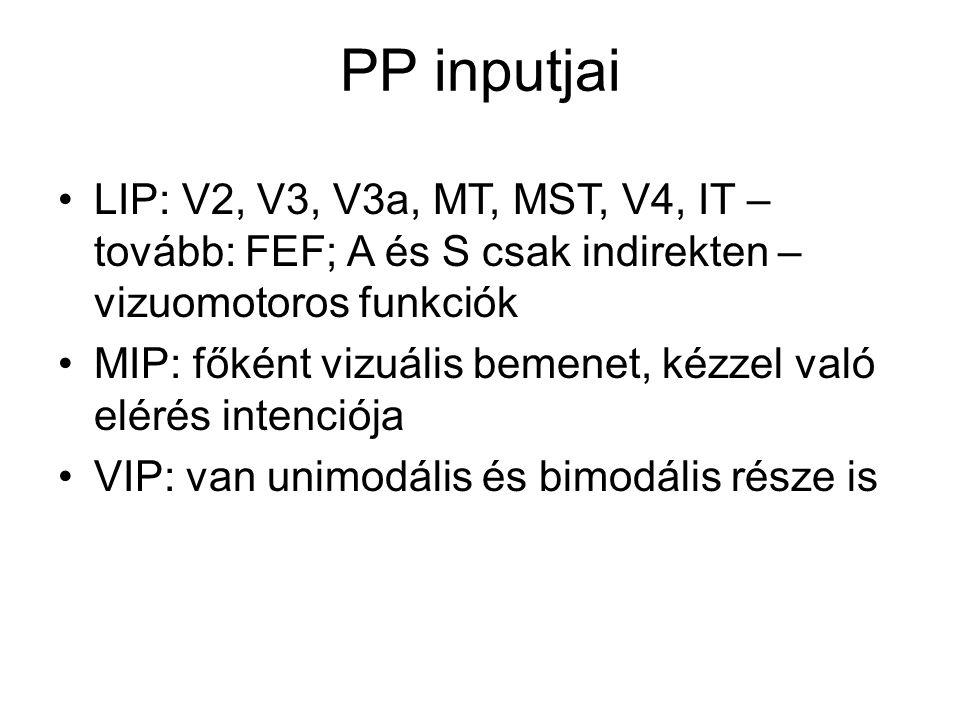 PP inputjai LIP: V2, V3, V3a, MT, MST, V4, IT – tovább: FEF; A és S csak indirekten – vizuomotoros funkciók MIP: főként vizuális bemenet, kézzel való