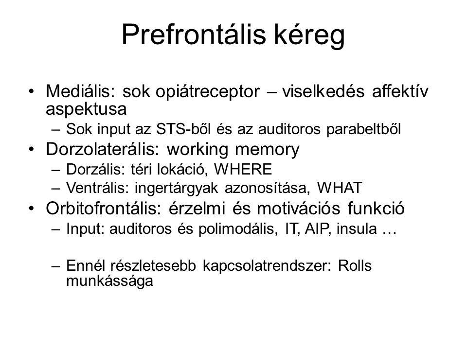 Prefrontális kéreg Mediális: sok opiátreceptor – viselkedés affektív aspektusa –Sok input az STS-ből és az auditoros parabeltből Dorzolaterális: worki