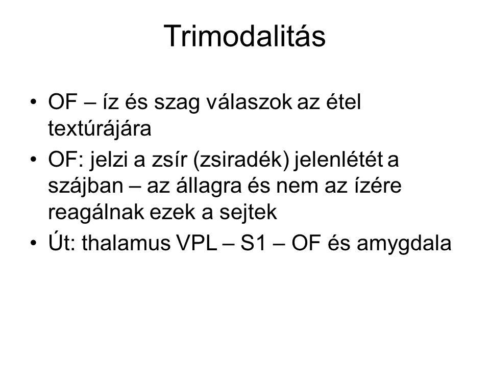 Trimodalitás OF – íz és szag válaszok az étel textúrájára OF: jelzi a zsír (zsiradék) jelenlétét a szájban – az állagra és nem az ízére reagálnak ezek