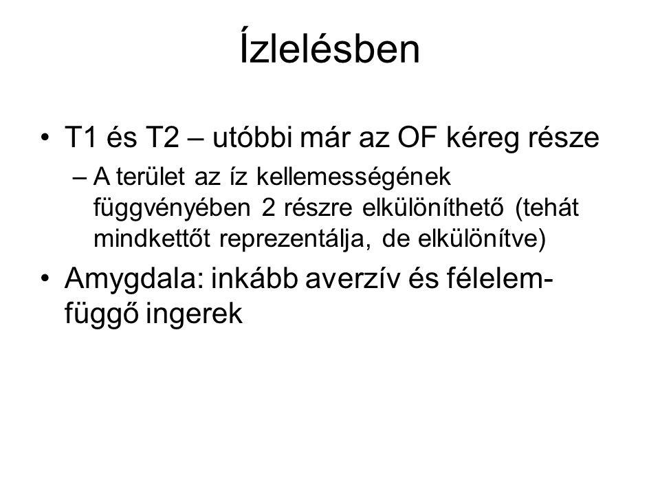 Ízlelésben T1 és T2 – utóbbi már az OF kéreg része –A terület az íz kellemességének függvényében 2 részre elkülöníthető (tehát mindkettőt reprezentálj