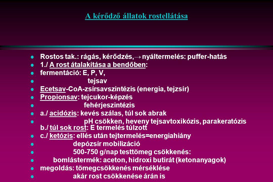 A kérődző állatok rostellátása l Rostos tak.: rágás, kérődzés,→ nyáltermelés: puffer-hatás l 1./ A rost átalakítása a bendőben: l fermentáció: E, P, V, l tejsav l Ecetsav-CoA-zsírsavszintézis (energia, tejzsír) l Propionsav: tejcukor-képzés l fehérjeszintézis l a./ acidózis: kevés szálas, túl sok abrak l pH csökken, heveny tejsavtoxikózis, parakeratózis b./ túl sok rost: E termelés túlzott l c./ ketózis: ellés után tejtermelés=energiahiány l depózsír mobilizáció l 500-750 g/nap testtömeg csökkenés: l bomlástermék: aceton, hidroxi butirát (ketonanyagok) l megoldás: tömegcsökkenés mérséklése l akár rost csökkenése árán is
