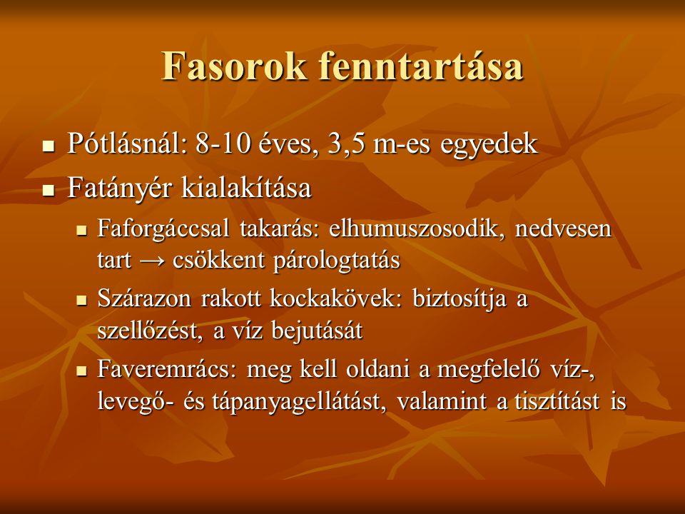 Fasorok fenntartása Pótlásnál: 8-10 éves, 3,5 m-es egyedek Pótlásnál: 8-10 éves, 3,5 m-es egyedek Fatányér kialakítása Fatányér kialakítása Faforgáccs