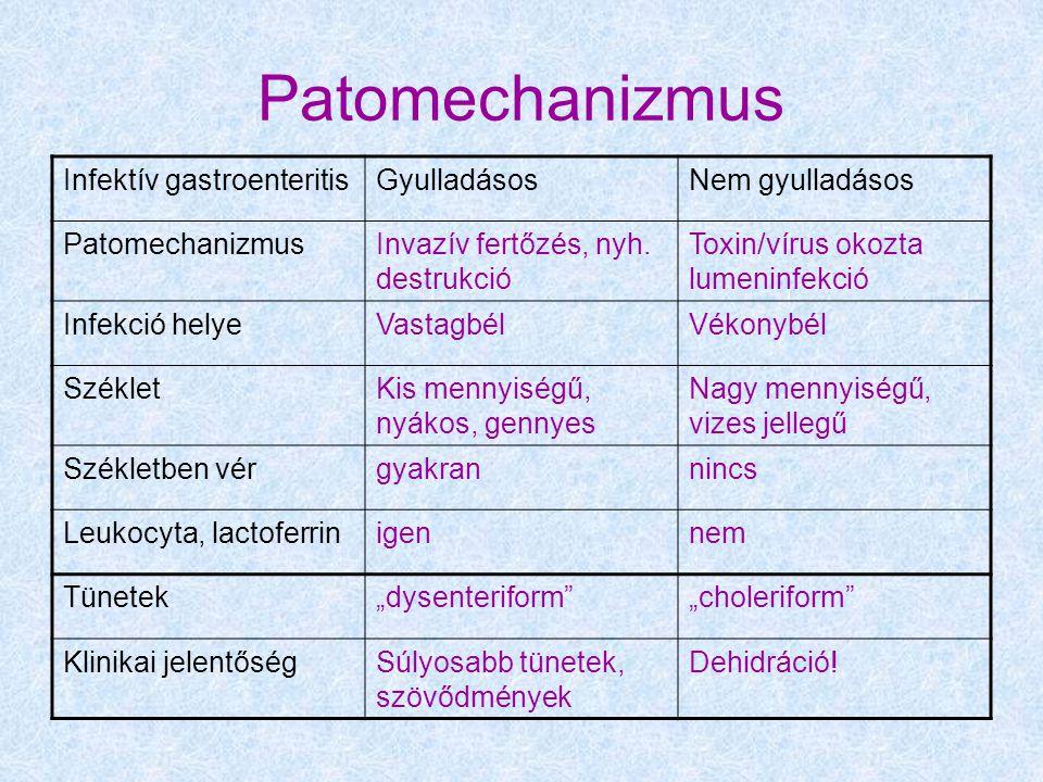 Patomechanizmus Infektív gastroenteritisGyulladásosNem gyulladásos PatomechanizmusInvazív fertőzés, nyh. destrukció Toxin/vírus okozta lumeninfekció I