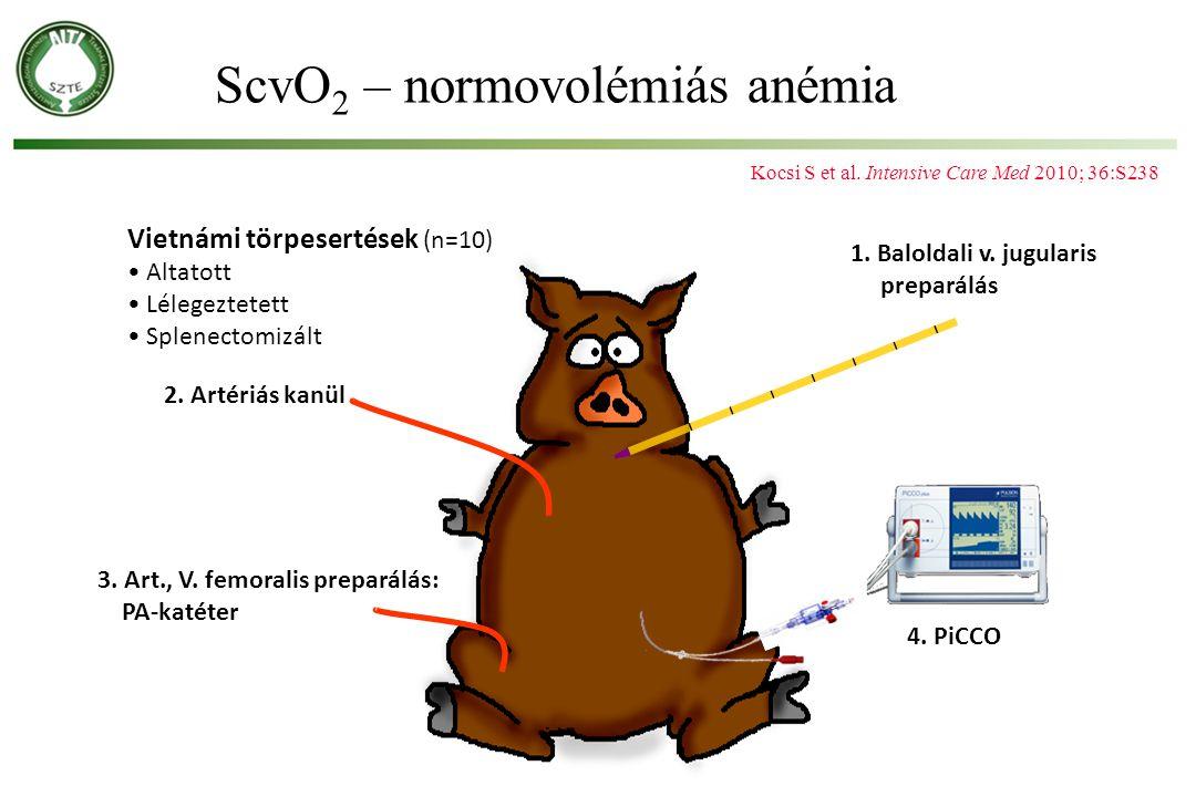 1. Baloldali v. jugularis preparálás 3. Art., V. femoralis preparálás: PA-katéter 4. PiCCO 2. Artériás kanül Vietnámi törpesertések (n=10) Altatott Lé