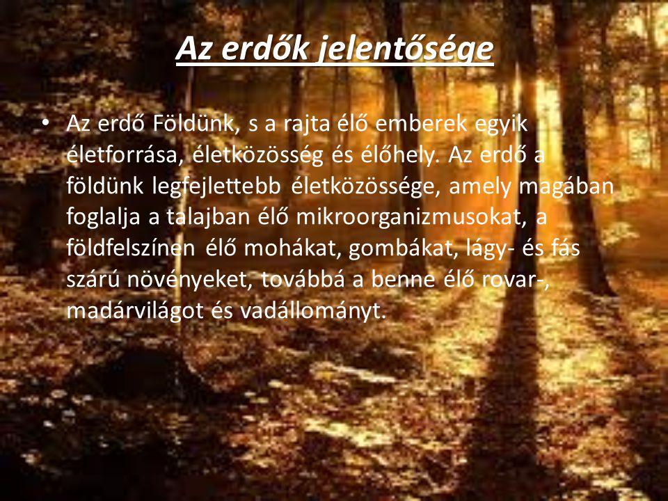 Az erdők jelentősége Az erdő Földünk, s a rajta élő emberek egyik életforrása, életközösség és élőhely. Az erdő a földünk legfejlettebb életközössége,