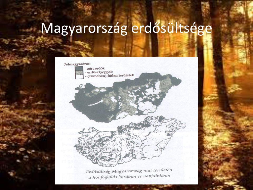 Az erdő legfontosabb hatásai és pusztulása -a legnagyobb szén-dioxid fogyasztó és oxigén-termelő, - a környezet legjelentősebb védője, egészségnevelő, regeneráló hatása egyedüli, jóléti, kulturális, esztétikai hatása nélkülözhetetlen -Az erdő pusztulása biológiai folyamat, valami miatt elhal a fa.