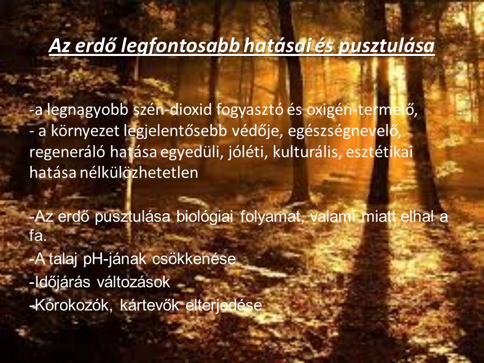 Az erdő legfontosabb hatásai és pusztulása -a legnagyobb szén-dioxid fogyasztó és oxigén-termelő, - a környezet legjelentősebb védője, egészségnevelő,
