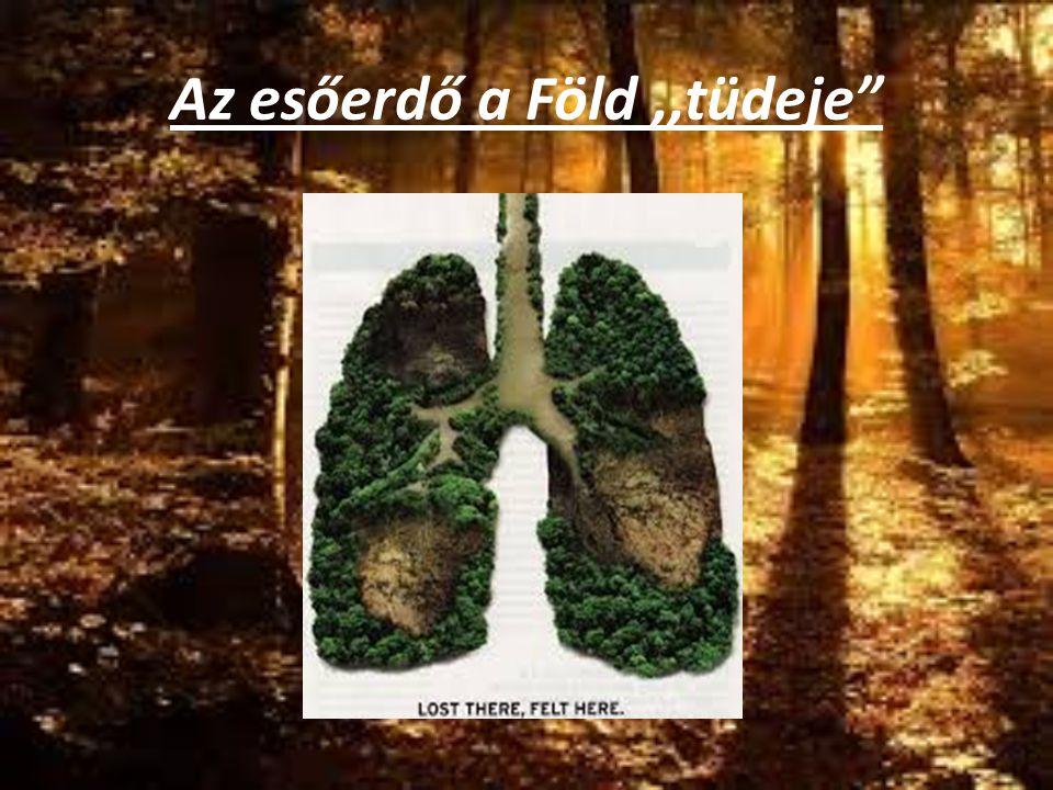 """Az esőerdő a Föld,,tüdeje"""""""