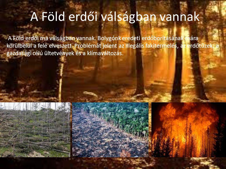 A Föld erdői válságban vannak A Föld erdői ma válságban vannak. Bolygónk eredeti erdőborításának mára körülbelül a fele elveszett. Problémát jelent az