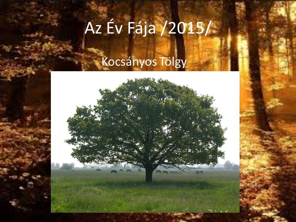 Az Év Fája /2015/ Kocsányos Tölgy