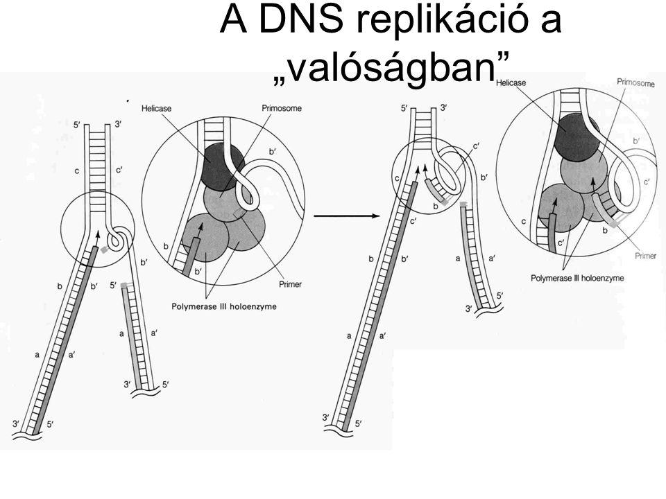 """A DNS replikáció a """"valóságban"""""""