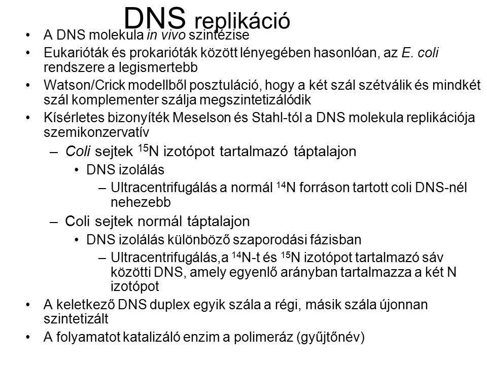 DNS replikáció A DNS molekula in vivo szintézise Eukarióták és prokarióták között lényegében hasonlóan, az E. coli rendszere a legismertebb Watson/Cri