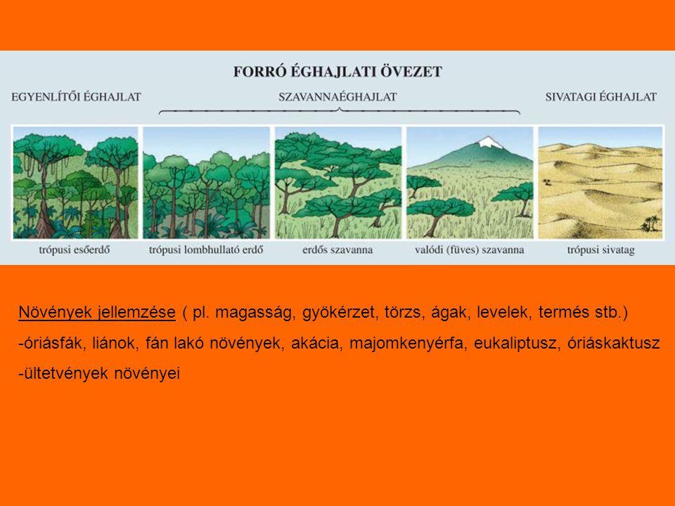 Növények jellemzése ( pl. magasság, gyökérzet, törzs, ágak, levelek, termés stb.) -óriásfák, liánok, fán lakó növények, akácia, majomkenyérfa, eukalip
