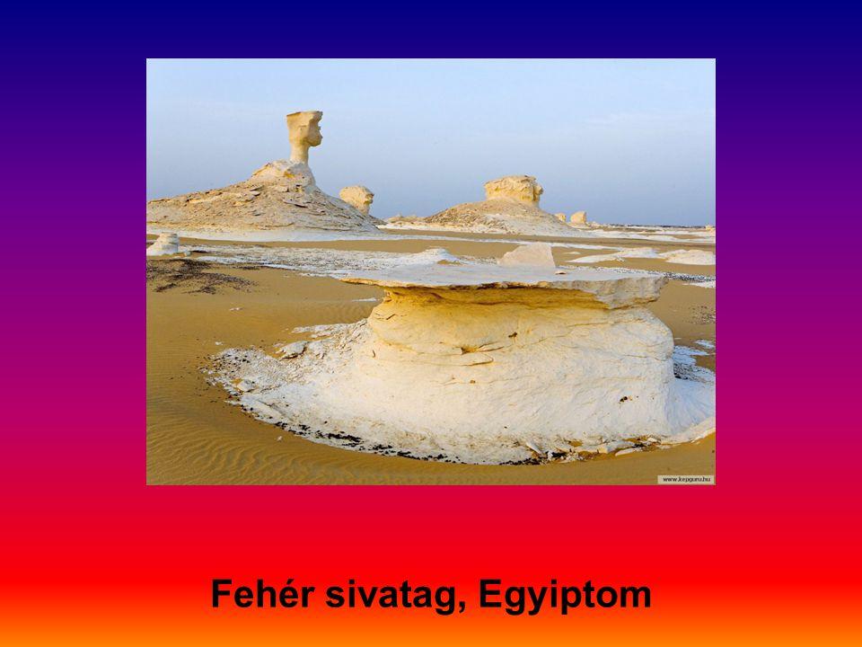 Magányos pálmafa a Szaharában