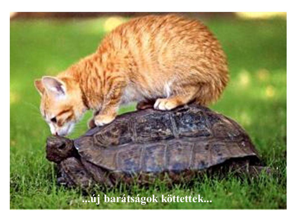 ...új barátságok köttettek...