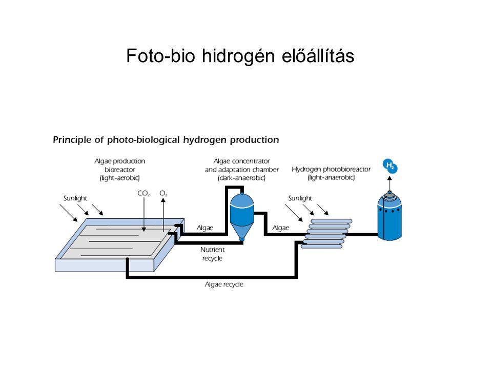 Foto-bio hidrogén előállítás