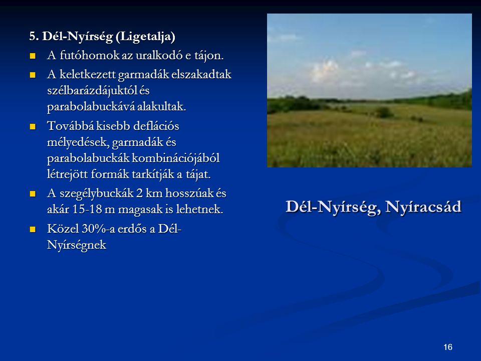 16 Dél-Nyírség, Nyíracsád 5. Dél-Nyírség (Ligetalja) A futóhomok az uralkodó e tájon. A futóhomok az uralkodó e tájon. A keletkezett garmadák elszakad