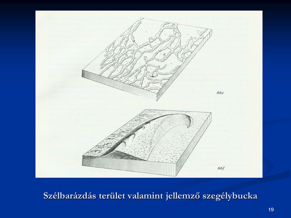 19 Szélbarázdás terület valamint jellemző szegélybucka