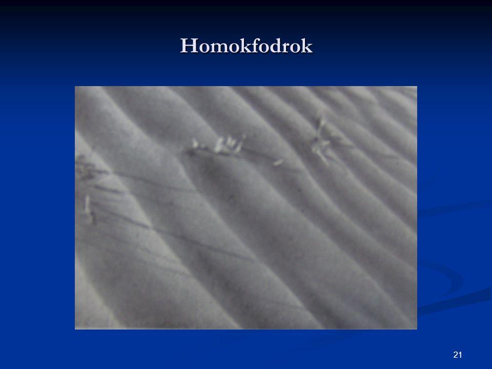 21 Homokfodrok