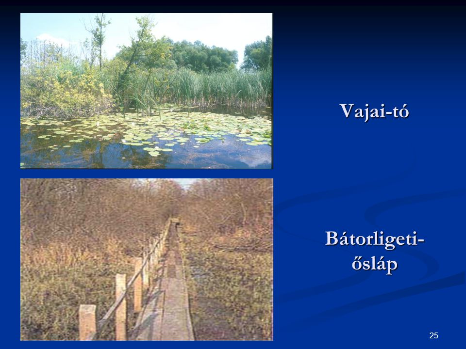 25 Vajai-tó Bátorligeti- ősláp