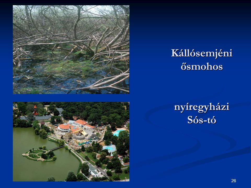 26 Kállósemjéni ősmohos nyíregyházi Sós-tó