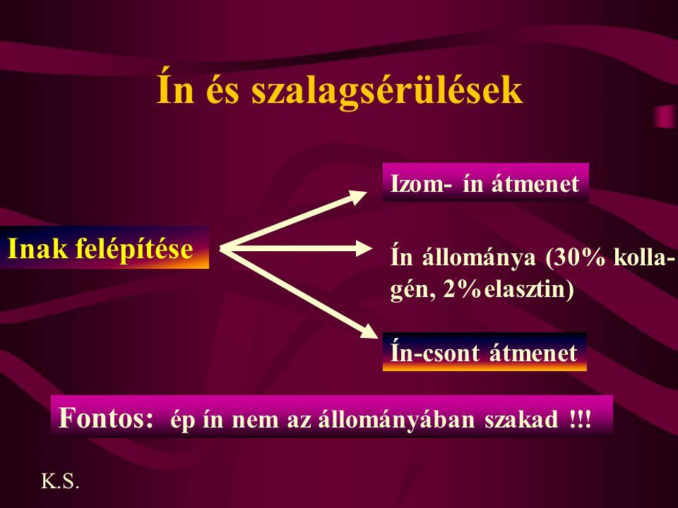 Ín és szalagsérülések Inak felépítése Izom- ín átmenet Ín állománya (30% kolla- gén, 2%elasztin) Ín-csont átmenet Fontos: ép ín nem az állományában sz
