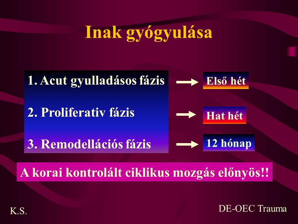 Inak gyógyulása 1. Acut gyulladásos fázis 2. Proliferativ fázis 3. Remodellációs fázis Első hét Hat hét 12 hónap K.S. DE-OEC Trauma A korai kontrolált