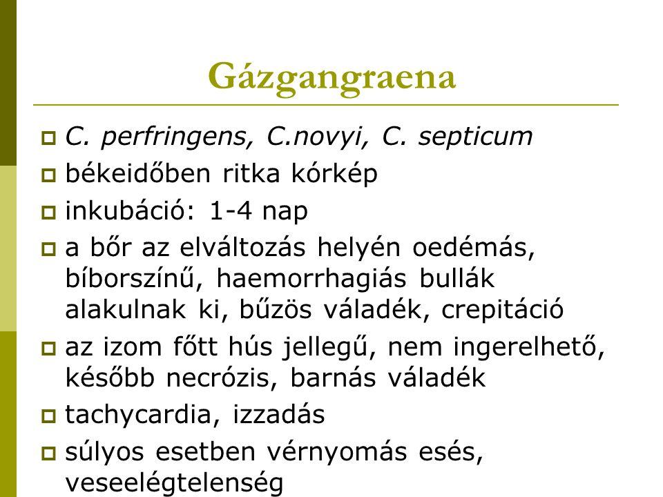 Gázgangraena  C. perfringens, C.novyi, C. septicum  békeidőben ritka kórkép  inkubáció: 1-4 nap  a bőr az elváltozás helyén oedémás, bíborszínű, h