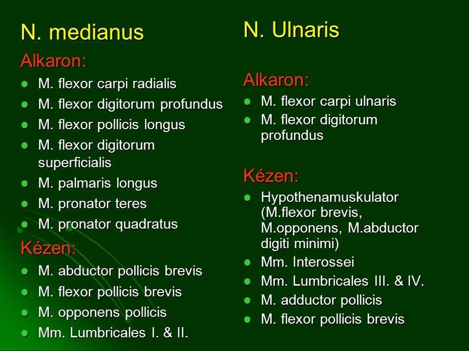 N.medianus Alkaron: M. flexor carpi radialis M. flexor carpi radialis M.