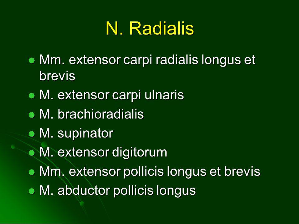 N.Radialis Mm. extensor carpi radialis longus et brevis Mm.