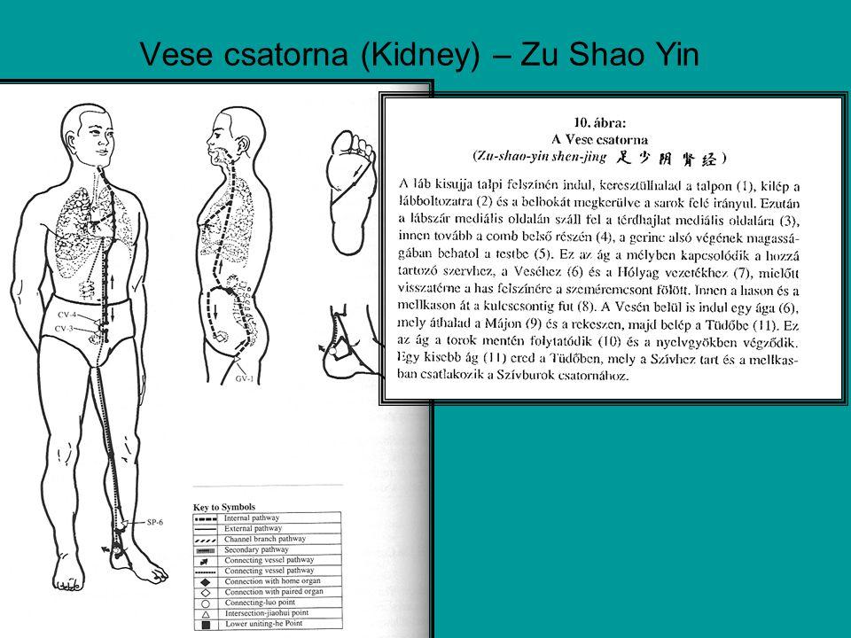 Vese csatorna (Kidney) – Zu Shao Yin