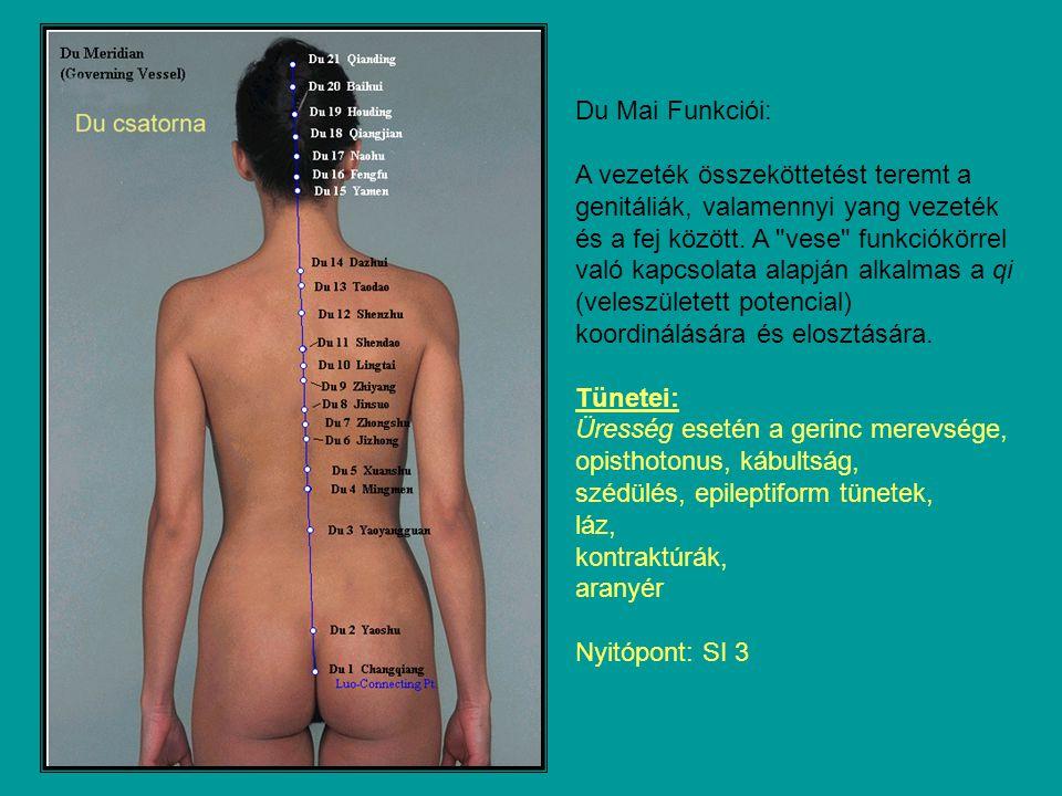 Du Mai Funkciói: A vezeték összeköttetést teremt a genitáliák, valamennyi yang vezeték és a fej között.
