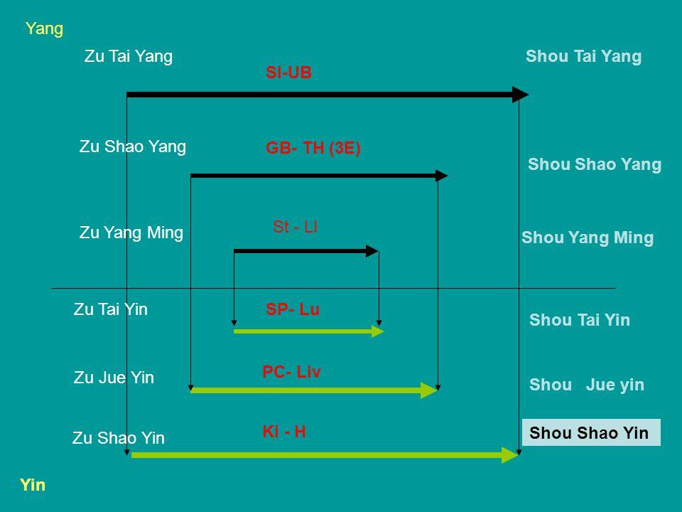 Yang Yin Shou Tai Yang Shou Shao Yang Shou Yang Ming Shou Tai Yin Shou Jue yin Shou Shao Yin Zu Tai Yang Zu Shao Yang Zu Yang Ming Zu Tai Yin Zu Jue Yin Zu Shao Yin SI-UB GB- TH (3E) St - LI SP- Lu PC- Liv Ki - H