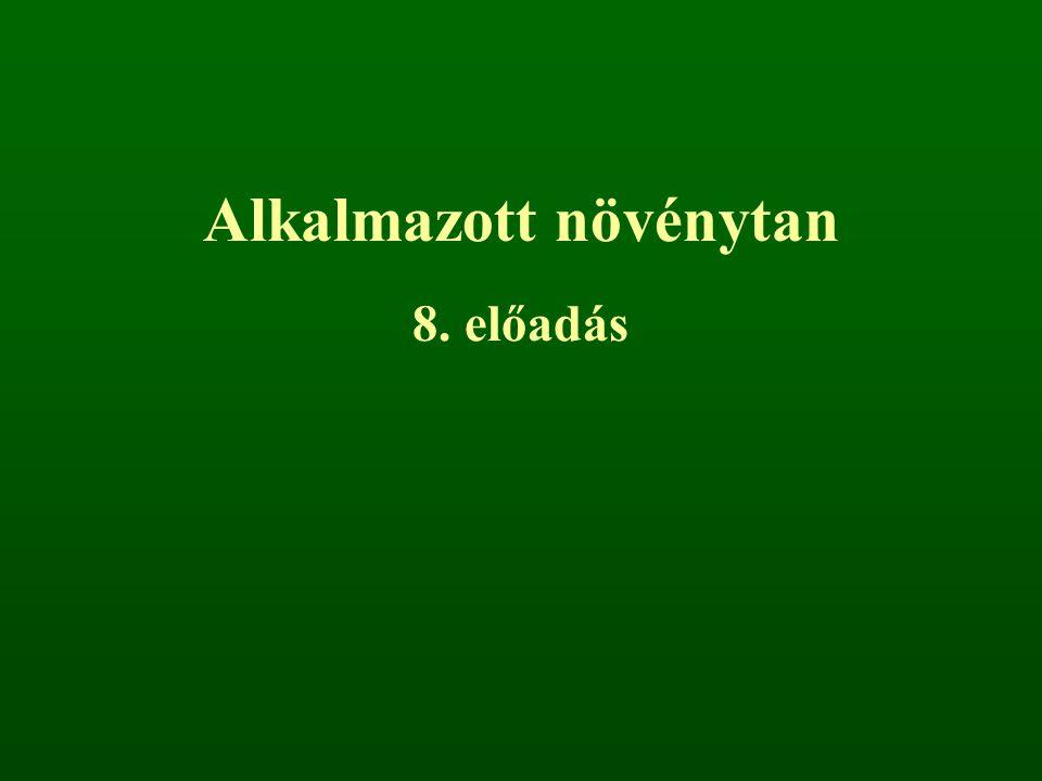 A jó víz- és tápanyagellátás miatt sikeresek a magaskórósok is, tipikus képviselőjük a tornyos ikravirág (Arabis turrita), hölgyestike (Hesperis matronalis), évelő holdviola (Lunaria rediviva), osztrák borzamag (Pleurospermum austriacum), farkasbogyó (Scopolia carniolica).