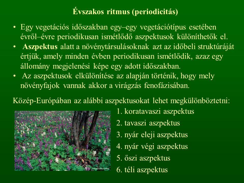 Évszakos ritmus (periodicitás) Egy vegetációs időszakban egy–egy vegetációtípus esetében évről–évre periodikusan ismétlődő aszpektusok különíthetők el