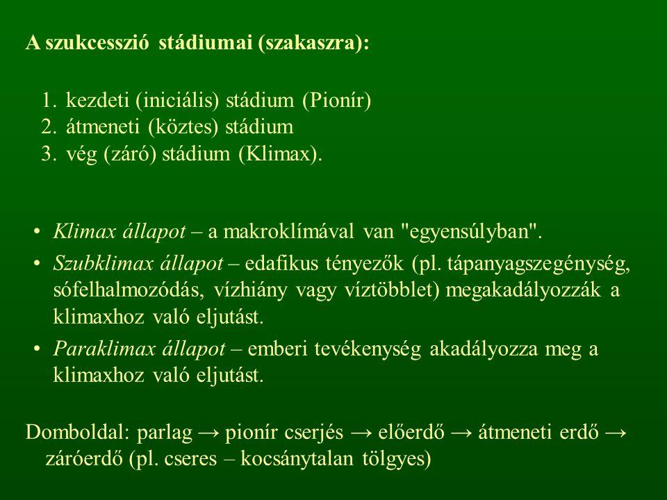A szukcesszió stádiumai (szakaszra): 1.kezdeti (iniciális) stádium (Pionír) 2.átmeneti (köztes) stádium 3.vég (záró) stádium (Klimax). Klimax állapot