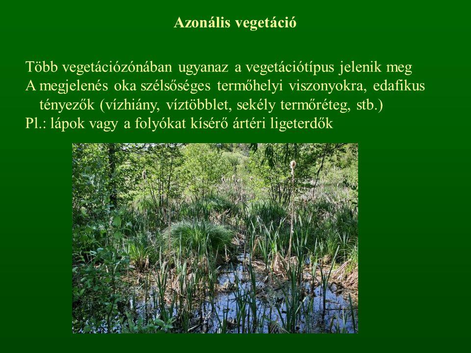 Azonális vegetáció Több vegetációzónában ugyanaz a vegetációtípus jelenik meg A megjelenés oka szélsőséges termőhelyi viszonyokra, edafikus tényezők (