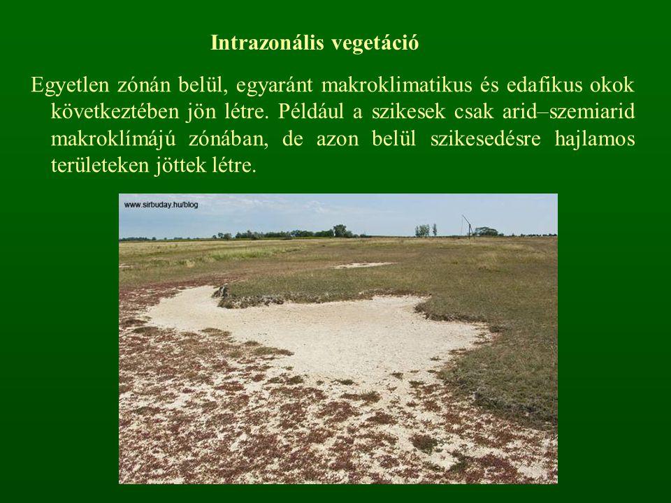 Intrazonális vegetáció Egyetlen zónán belül, egyaránt makroklimatikus és edafikus okok következtében jön létre. Például a szikesek csak arid–szemiarid