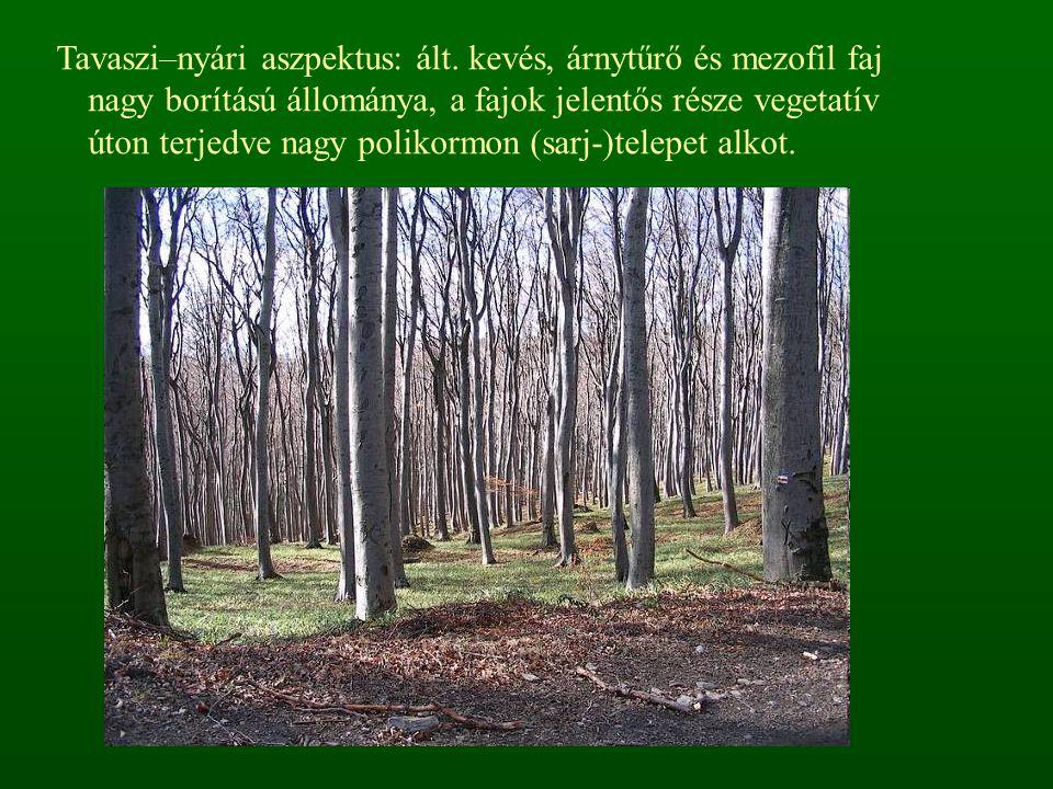Tavaszi–nyári aszpektus: ált. kevés, árnytűrő és mezofil faj nagy borítású állománya, a fajok jelentős része vegetatív úton terjedve nagy polikormon (