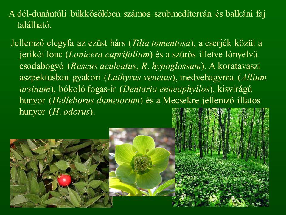 A dél-dunántúli bükkösökben számos szubmediterrán és balkáni faj található. Jellemző elegyfa az ezüst hárs (Tilia tomentosa), a cserjék közül a jerikó