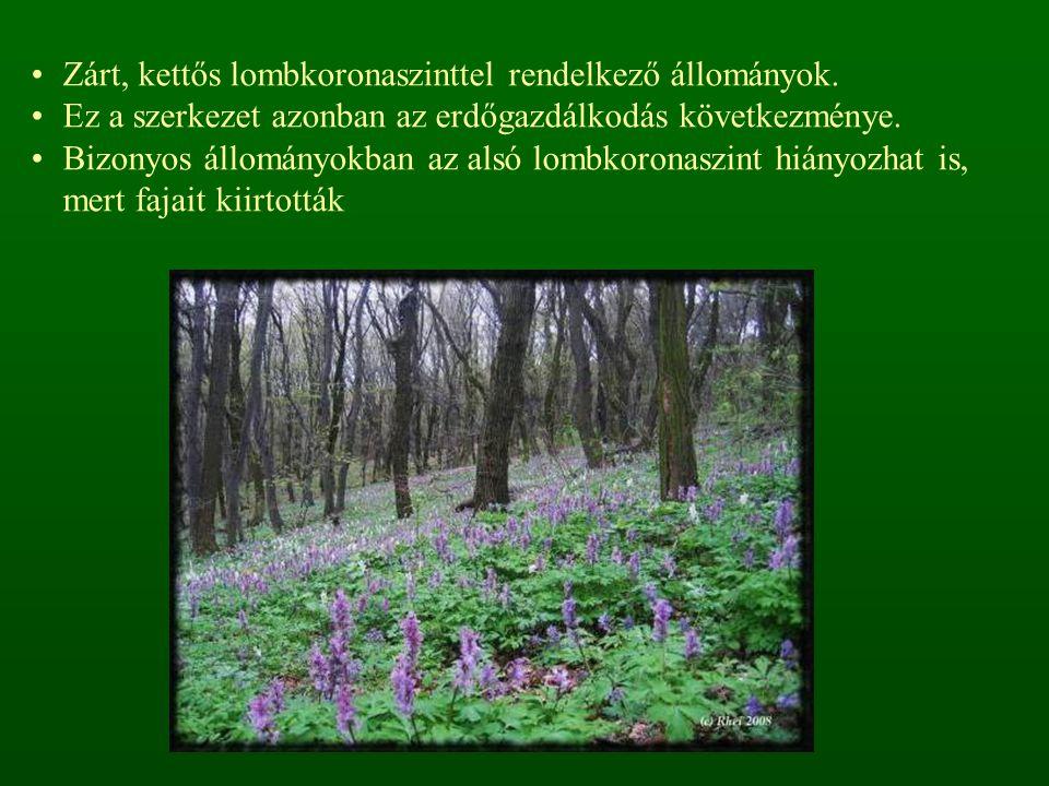 Zárt, kettős lombkoronaszinttel rendelkező állományok. Ez a szerkezet azonban az erdőgazdálkodás következménye. Bizonyos állományokban az alsó lombkor
