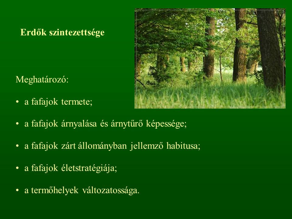 Erdők szintezettsége Meghatározó: a fafajok termete; a fafajok árnyalása és árnytűrő képessége; a fafajok zárt állományban jellemző habitusa; a fafajo