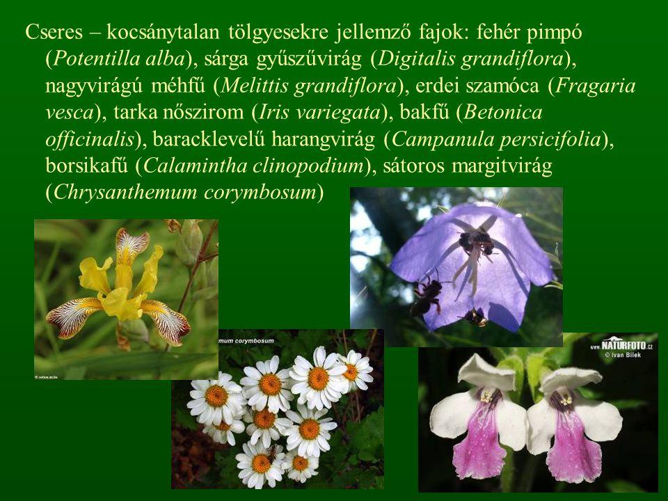 Cseres – kocsánytalan tölgyesekre jellemző fajok: fehér pimpó (Potentilla alba), sárga gyűszűvirág (Digitalis grandiflora), nagyvirágú méhfű (Melittis