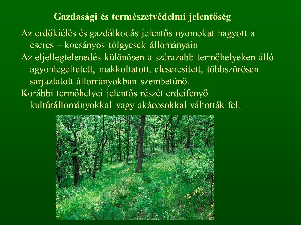 Az erdőkiélés és gazdálkodás jelentős nyomokat hagyott a cseres – kocsányos tölgyesek állományain Az eljellegtelenedés különösen a szárazabb termőhely