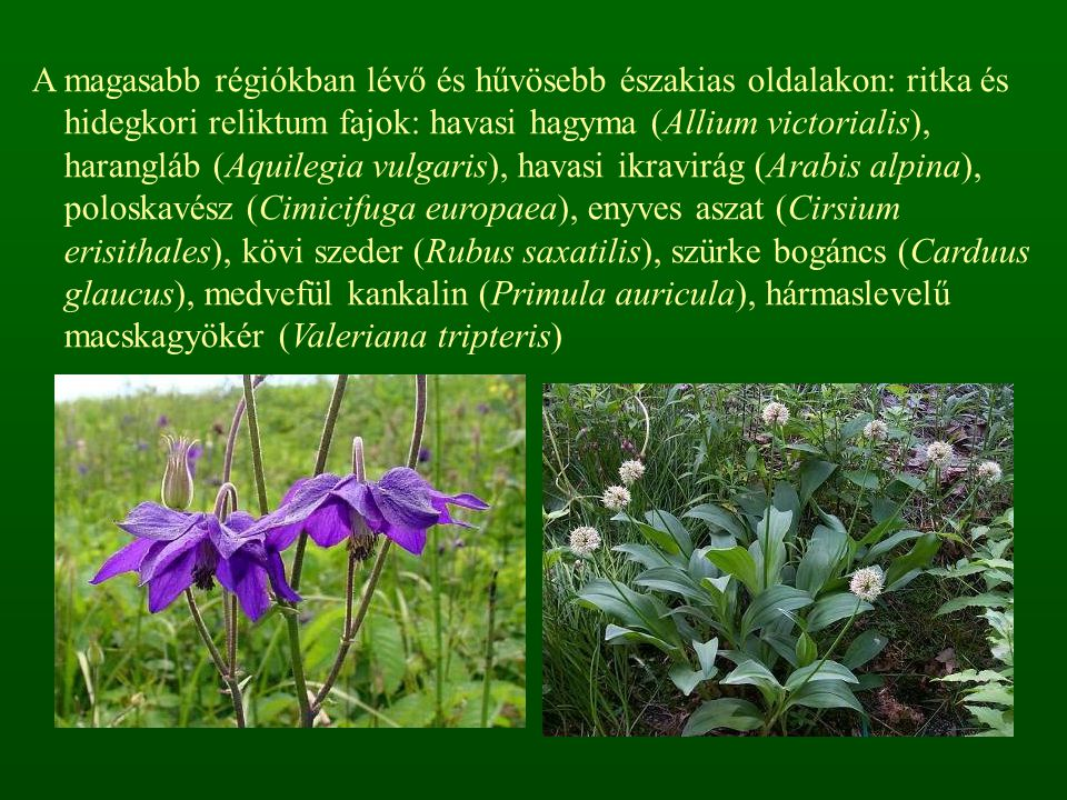 A magasabb régiókban lévő és hűvösebb északias oldalakon: ritka és hidegkori reliktum fajok: havasi hagyma (Allium victorialis), harangláb (Aquilegia